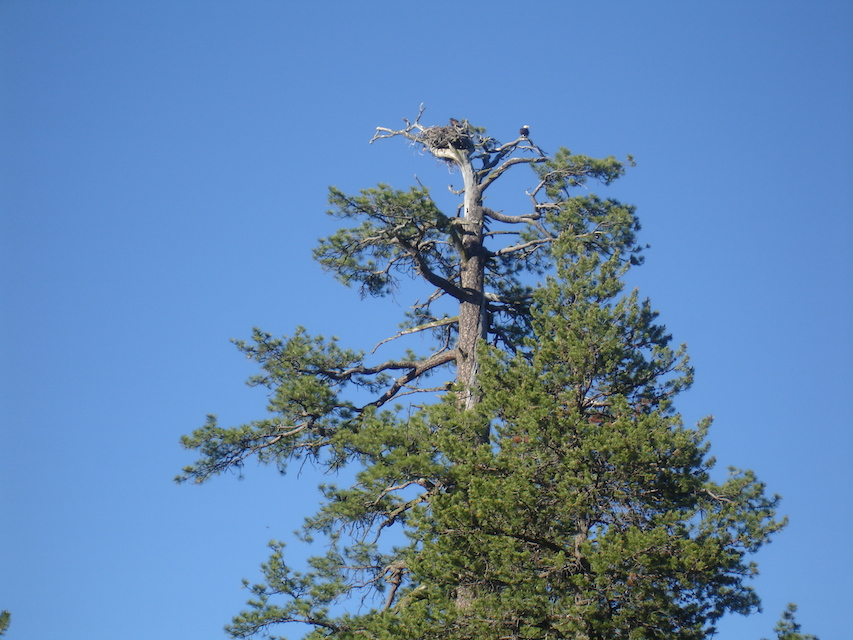 Eagle nest copy