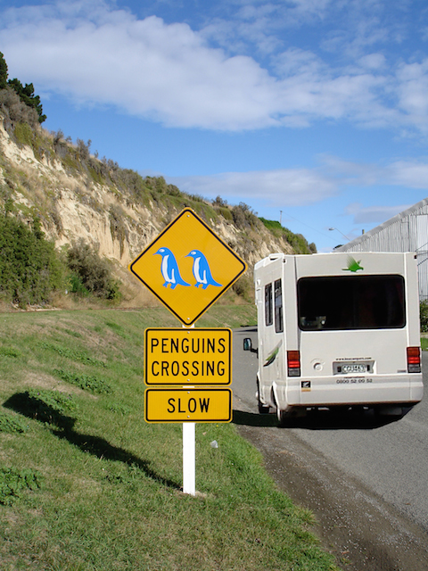 Kiwis & Penguines share the roads