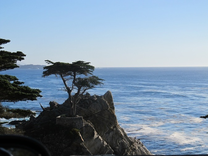 Lone cypress on 17-Mile Drive